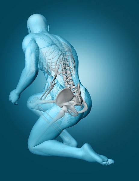 Na obrazie widnieje sylwetka modelu anatomicznego męższyzny. widać jednoznacznie że cierpi on z powodu bólu. Katowice Fizjoterapia stanowi niezwykle istotne miejsce dla pacjentów borykających się z tego typu problemami z kręgosłupem.